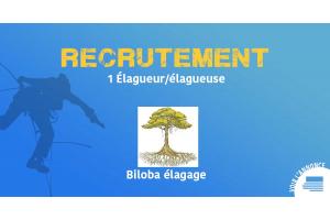 Offre d'emploi - Biloba élagage