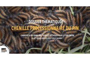 Dossier thématique CHENILLE PROCESSIONNAIRE