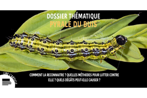 Dossier thématique PYRALE DU BUIS
