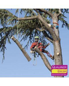 Formation au démontage perfectionnement pour arboristes et élagueurs. Hévéa Formations est certifiée Qualiopi.
