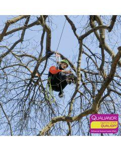 Formation au déplacement SRT pour arboristes et élagueurs. Hévéa Formations est certifiée Qualiopi.