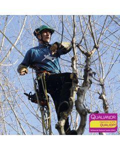 Formation aux tailles d'ornement pour arboristes et élageurs. Hévéa formations est certifié Qualiopi.